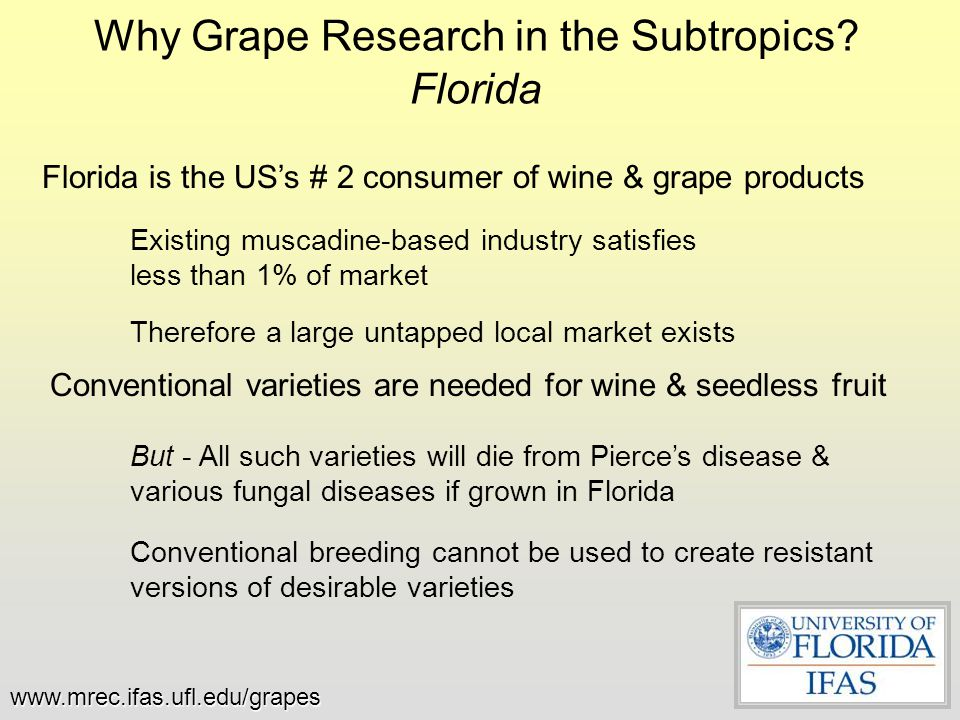 Why Grape Research in the Subtropics Florida