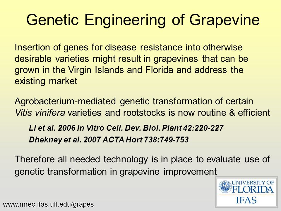 Genetic Engineering of Grapevine