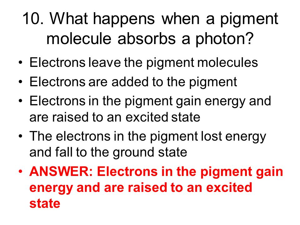 10. What happens when a pigment molecule absorbs a photon