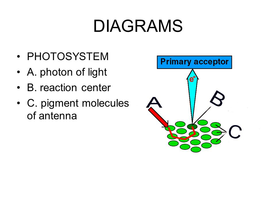 DIAGRAMS PHOTOSYSTEM A. photon of light B. reaction center