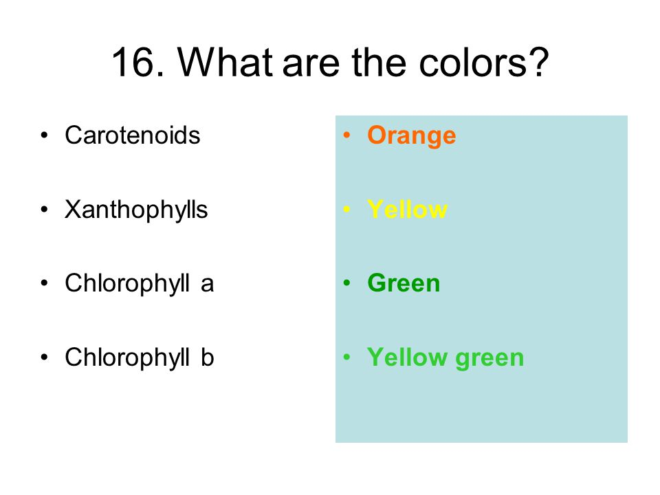 16. What are the colors Carotenoids Xanthophylls Chlorophyll a