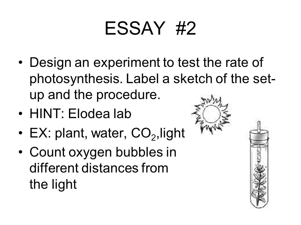 ESSAY #2 Design an experiment to test the rate of photosynthesis. Label a sketch of the set-up and the procedure.