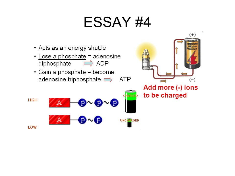ESSAY #4 Add more (-) ions to be charged