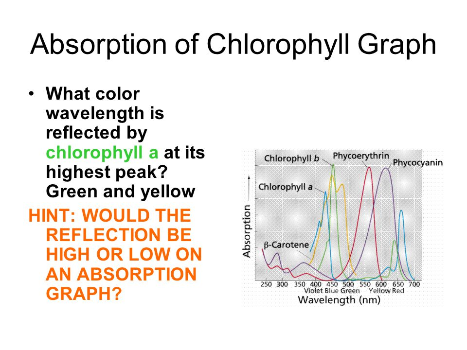Absorption of Chlorophyll Graph