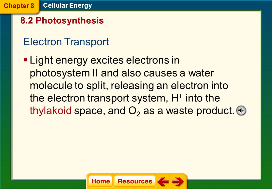 Chapter 8 Cellular Energy. 8.2 Photosynthesis. Electron Transport.