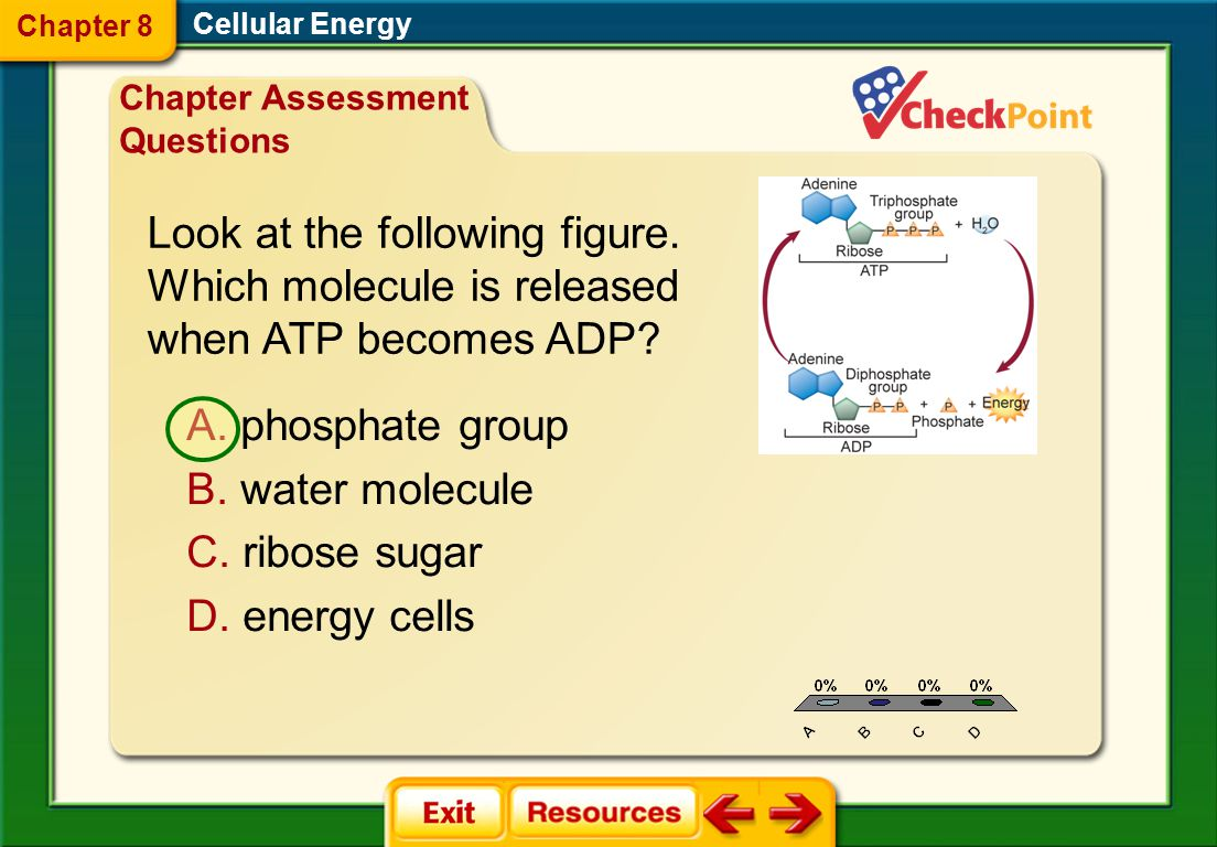 Chapter 8 Cellular Energy. Chapter Assessment Questions. Look at the following figure. Which molecule is released when ATP becomes ADP
