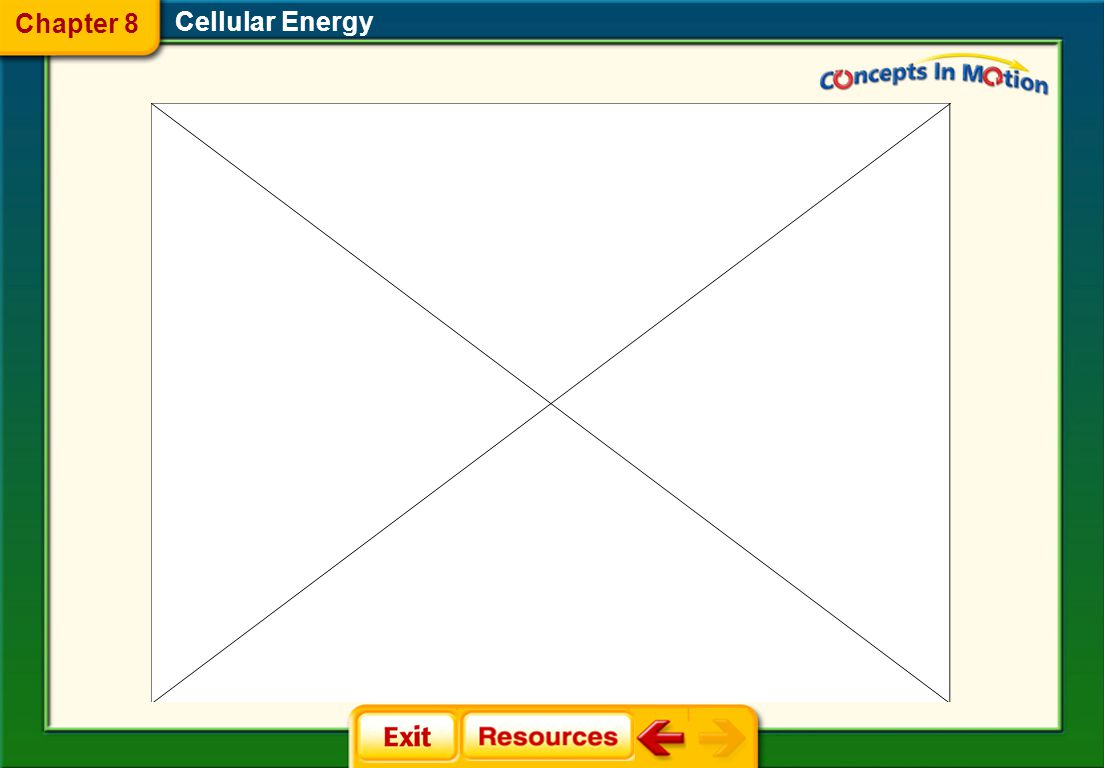 Chapter 8 Cellular Energy