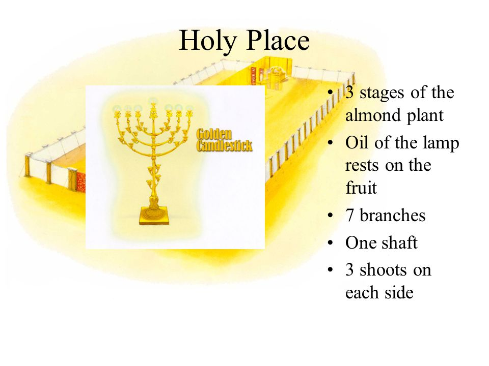 Holy Place 3 stages of the almond plant