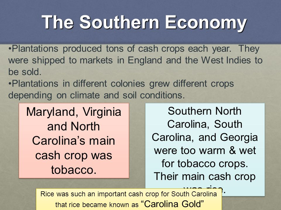 The Southern Economy Plantations produced tons of cash crops each year. They were shipped to markets in England and the West Indies to be sold.