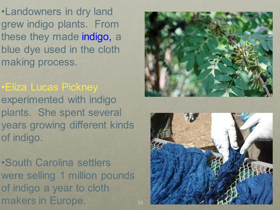 Landowners in dry land grew indigo plants