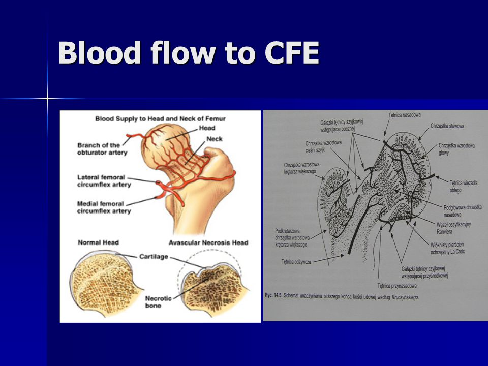 Blood flow to CFE