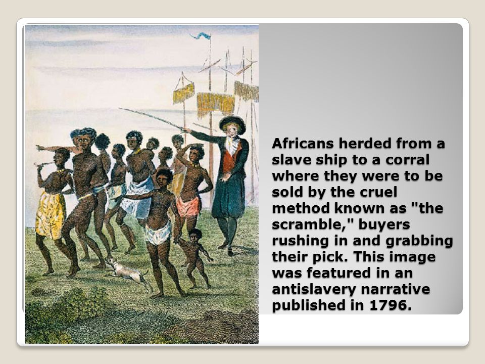 Africans herded from a slave ship to a corral where they were to be sold by the cruel method known as the scramble, buyers rushing in and grabbing their pick.