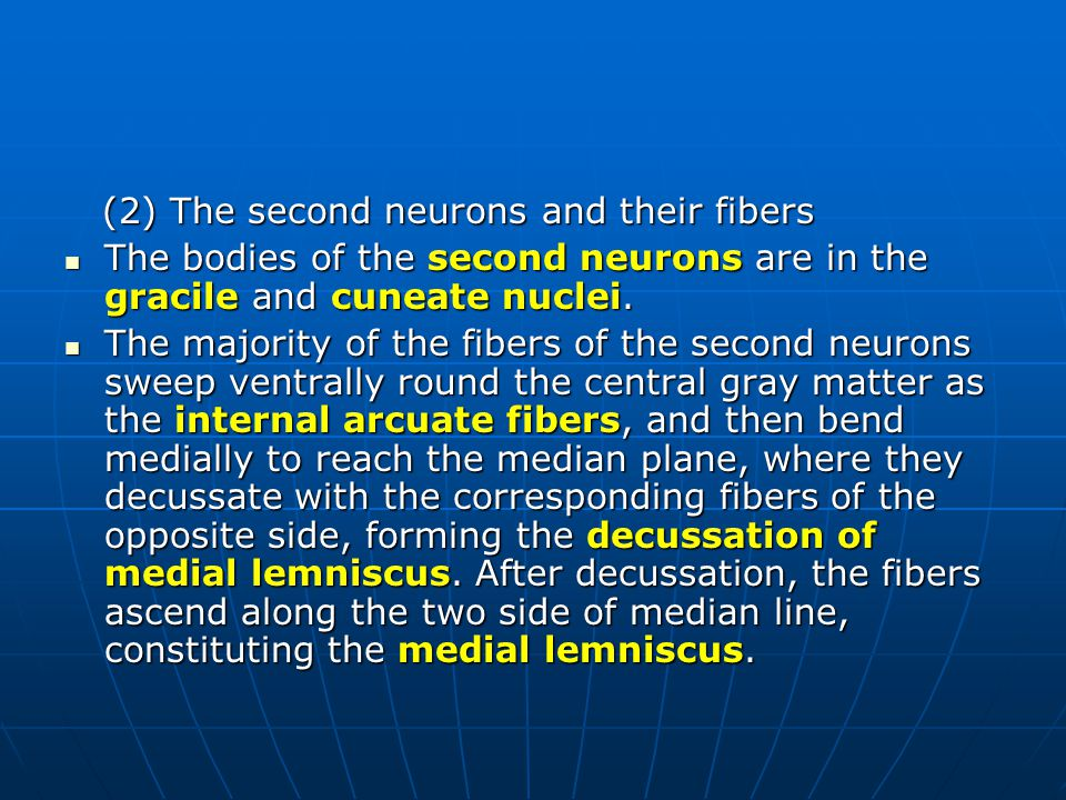 (2) The second neurons and their fibers