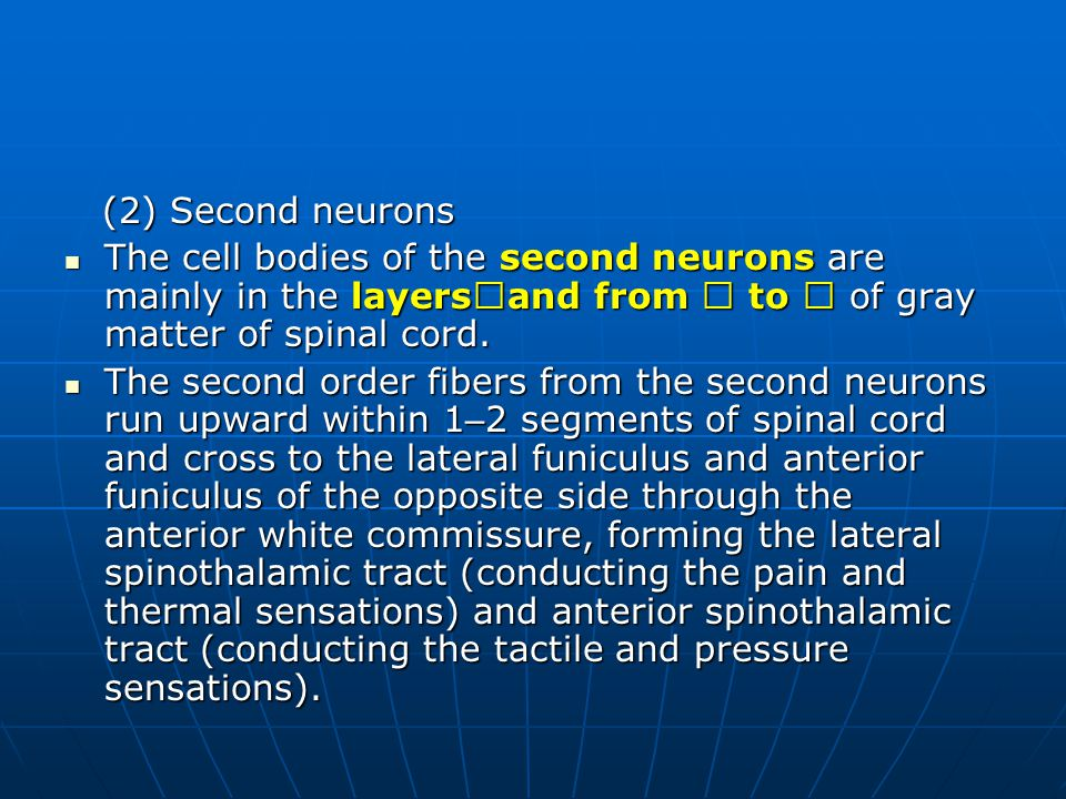 (2) Second neurons The cell bodies of the second neurons are mainly in the layersⅠand from Ⅳ to Ⅶ of gray matter of spinal cord.
