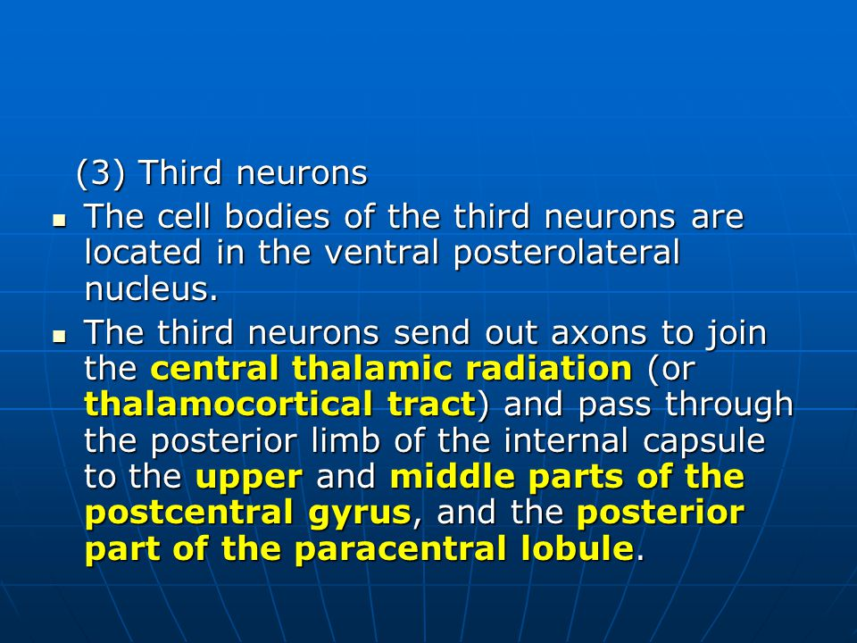 (3) Third neurons The cell bodies of the third neurons are located in the ventral posterolateral nucleus.