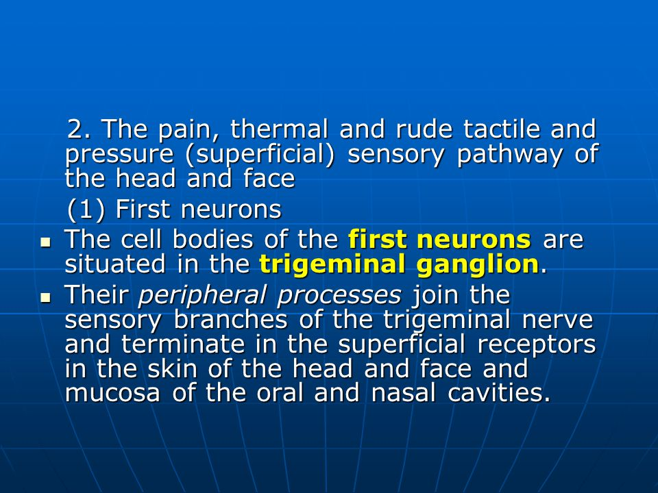 2. The pain, thermal and rude tactile and pressure (superficial) sensory pathway of the head and face