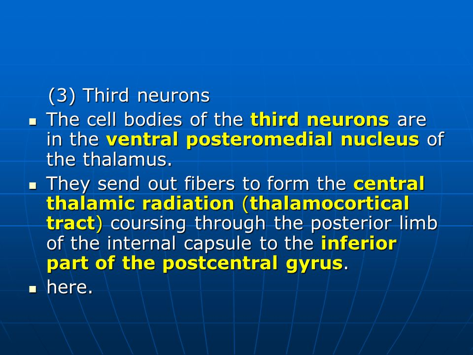 (3) Third neurons The cell bodies of the third neurons are in the ventral posteromedial nucleus of the thalamus.