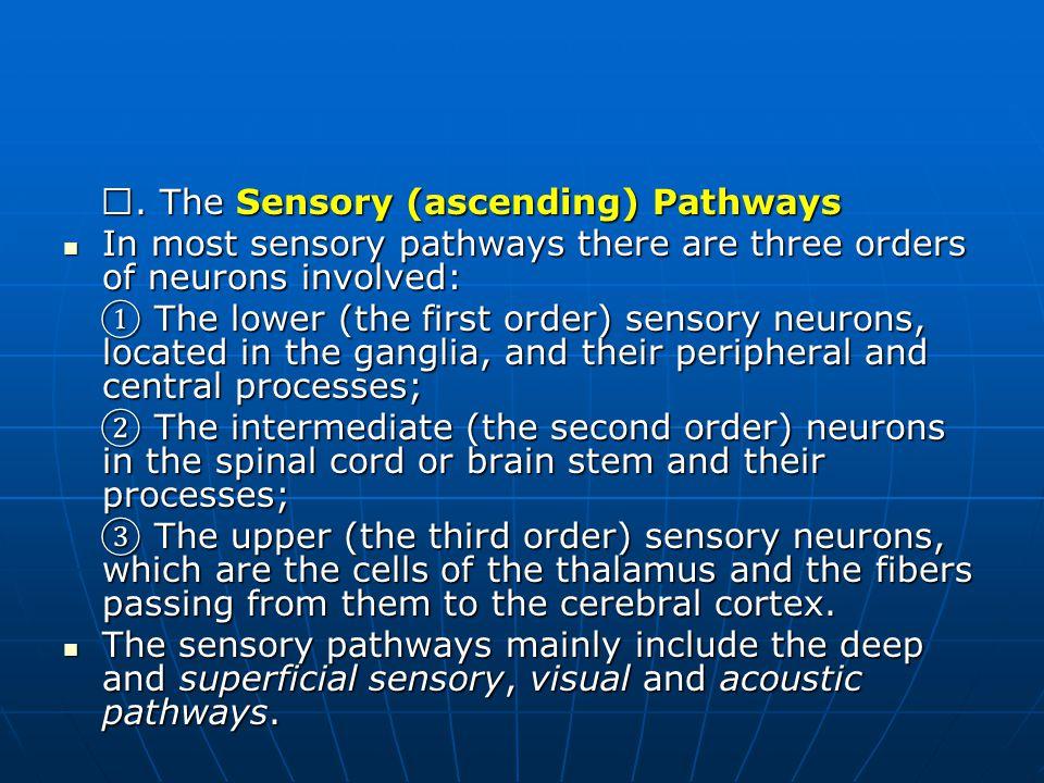 Ⅰ. The Sensory (ascending) Pathways
