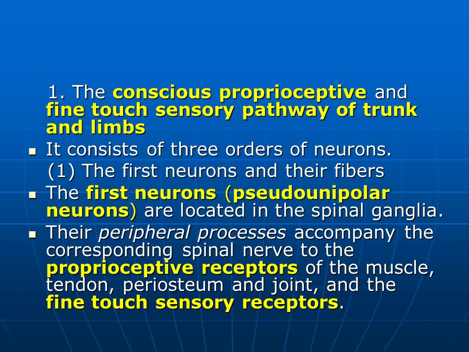 1. The conscious proprioceptive and fine touch sensory pathway of trunk and limbs