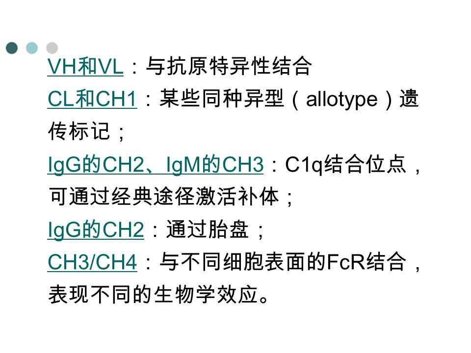 VH和VL:与抗原特异性结合 CL和CH1:某些同种异型(allotype)遗传标记; IgG的CH2、IgM的CH3:C1q结合位点,可通过经典途径激活补体; IgG的CH2:通过胎盘; CH3/CH4:与不同细胞表面的FcR结合,表现不同的生物学效应。