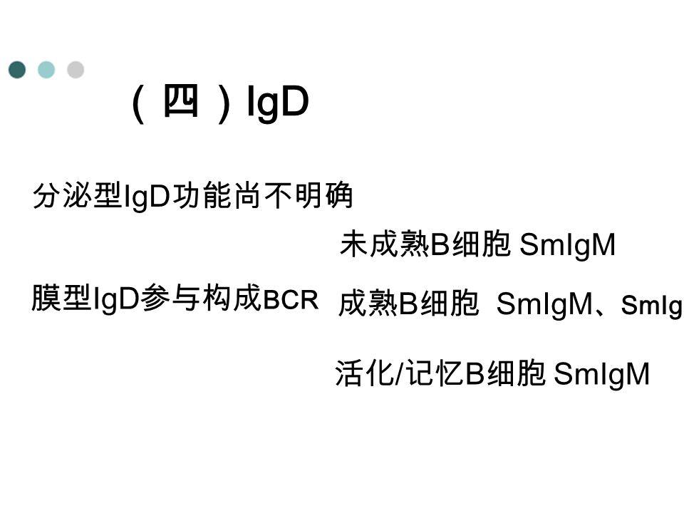(四)IgD 分泌型IgD功能尚不明确 未成熟B细胞 SmIgM 膜型IgD参与构成BCR 成熟B细胞 SmIgM、SmIgD