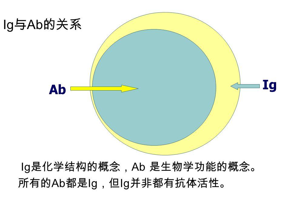 Ig与Ab的关系 Ig Ab Ig是化学结构的概念,Ab 是生物学功能的概念。所有的Ab都是Ig,但Ig并非都有抗体活性。