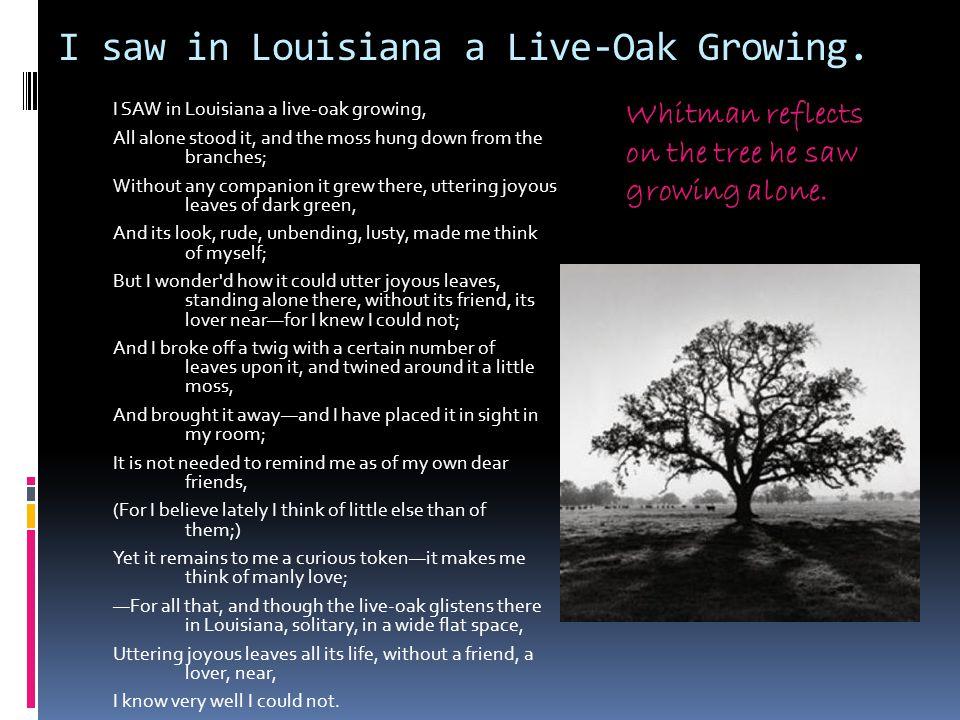 I saw in Louisiana a Live-Oak Growing.