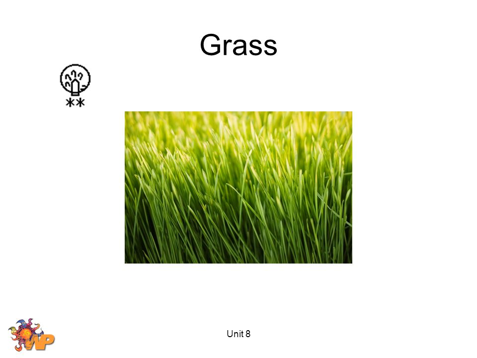 Grass Unit 8