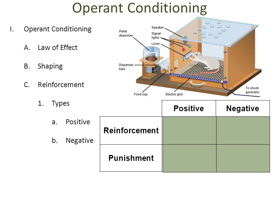 Operant Conditioning Operant Conditioning Law of Effect Shaping