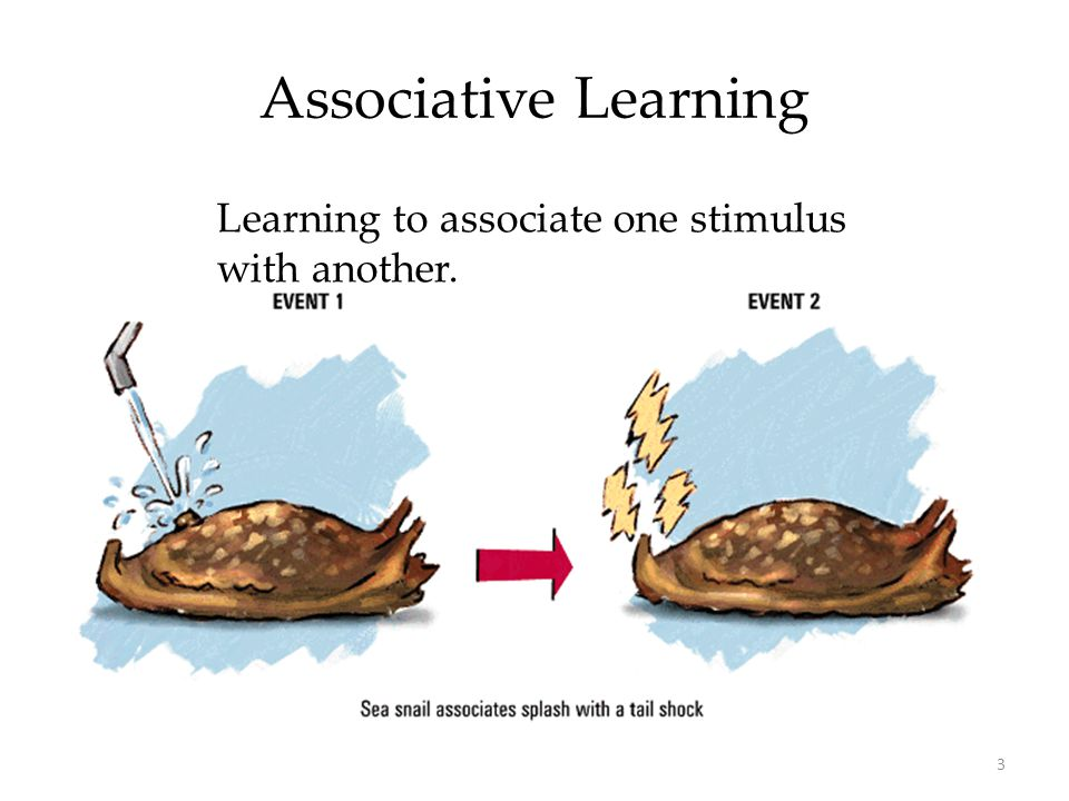 Associative Learning Learning to associate one stimulus with another.