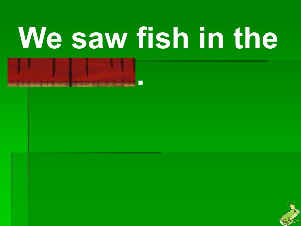 We saw fish in the riverbed.
