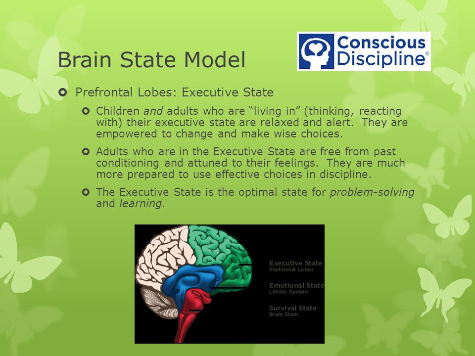 Brain State Model Prefrontal Lobes: Executive State