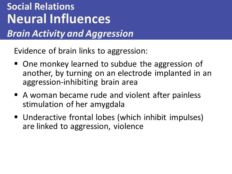 Neural Influences Social Relations Brain Activity and Aggression