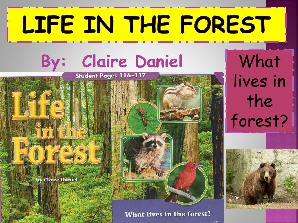 What lives in the forest