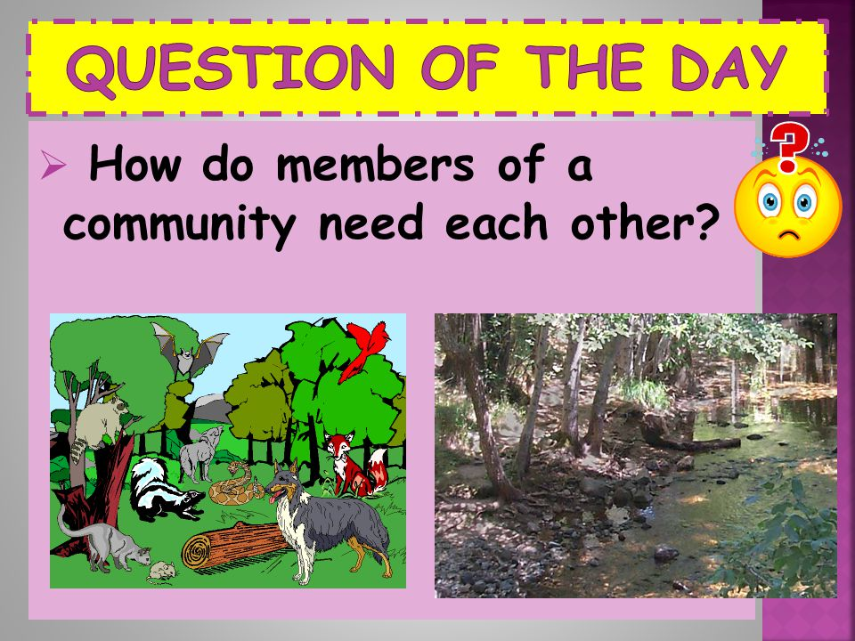 Question of the Day How do members of a community need each other