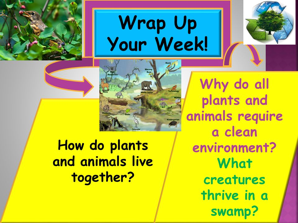 Wrap Up Your Week! Why do all plants and animals require a clean environment What creatures thrive in a swamp