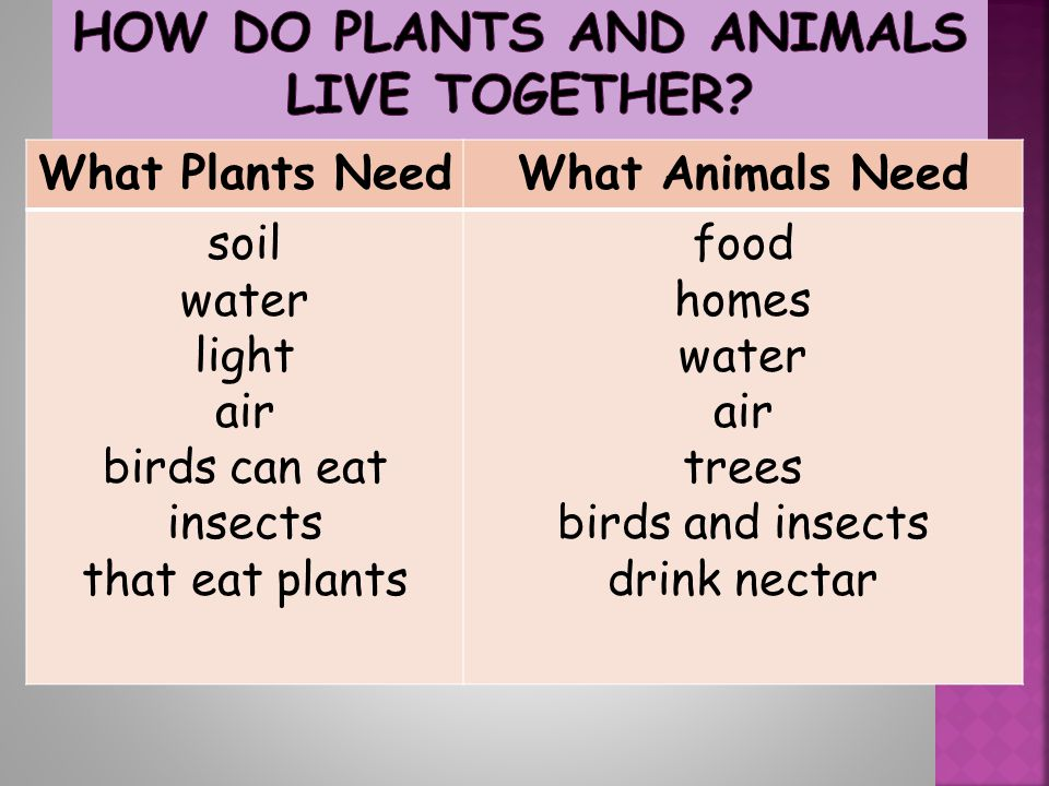 How Do Plants and Animals Live Together