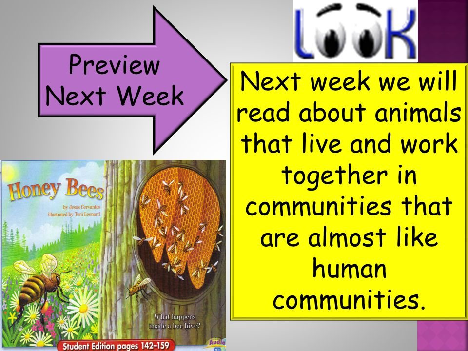 Preview Next Week Next week we will read about animals that live and work together in communities that are almost like human communities.