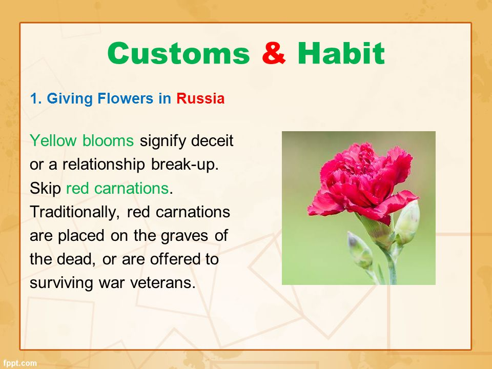 Customs & Habit Yellow blooms signify deceit