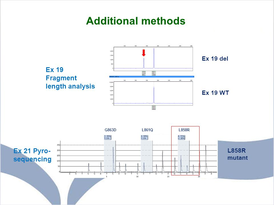 Additional methods Ex 19 Fragment length analysis