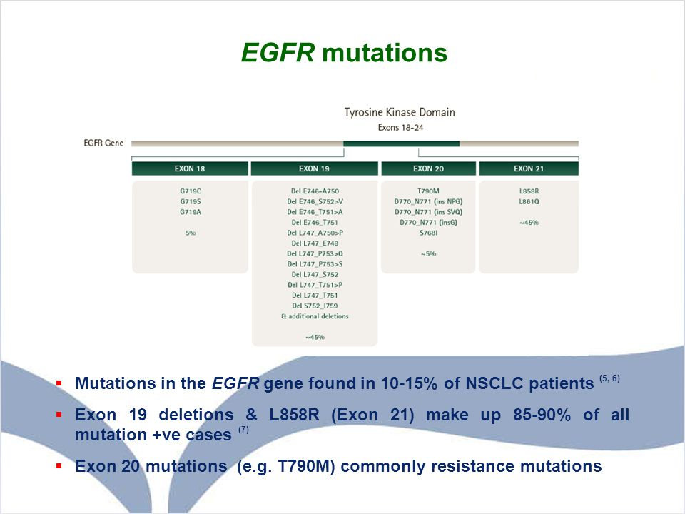EGFR mutations Mutations in the EGFR gene are present in 10-15% of NSCLC patients.