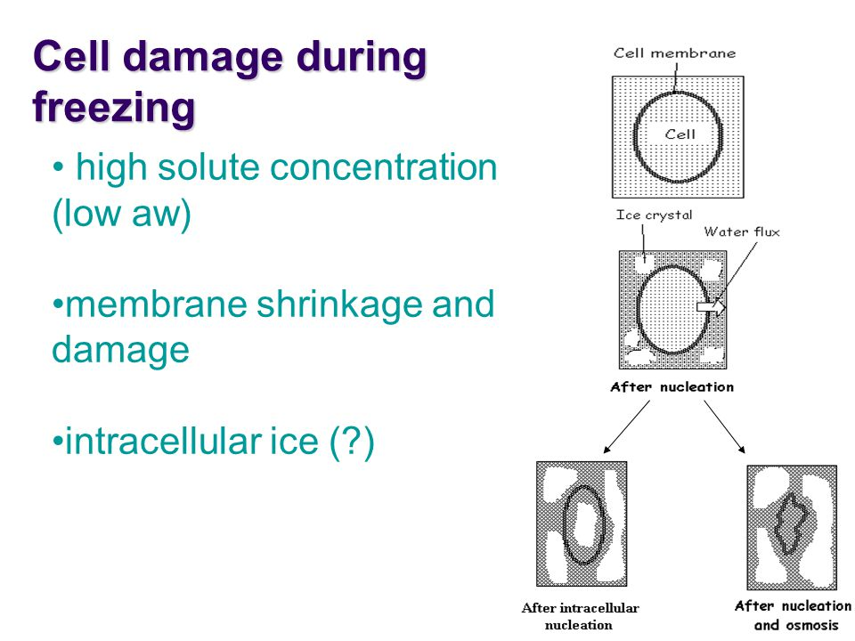 Cell damage during freezing