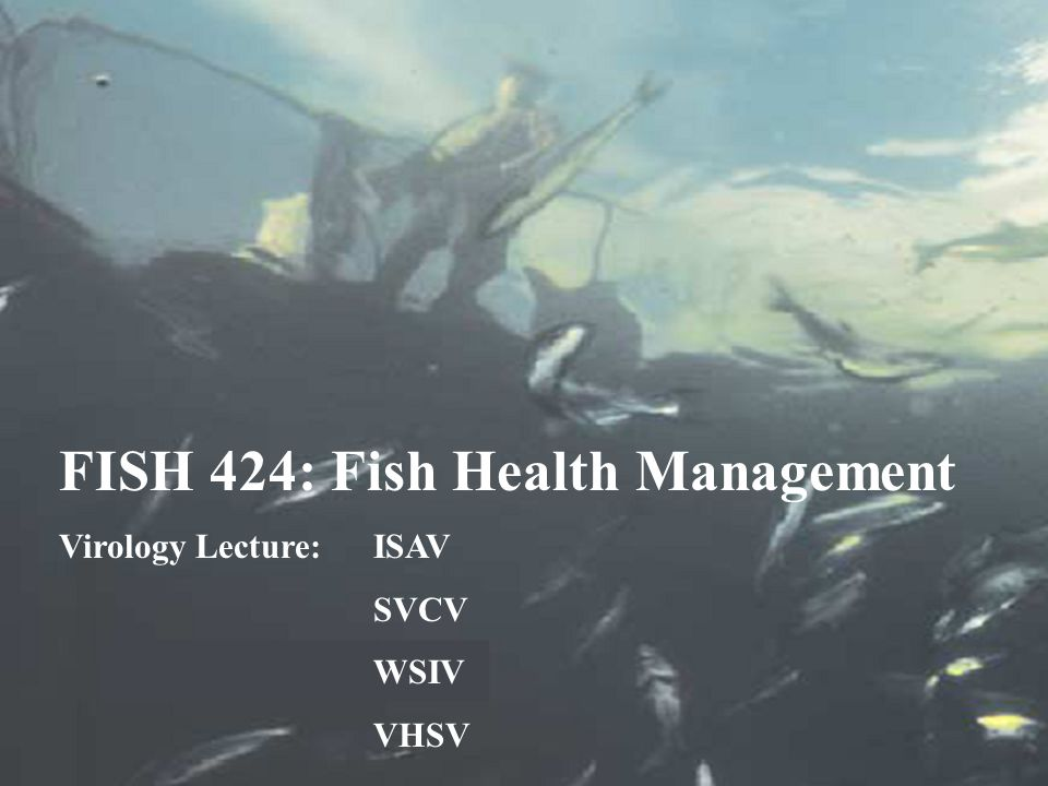 FISH 424: Fish Health Management