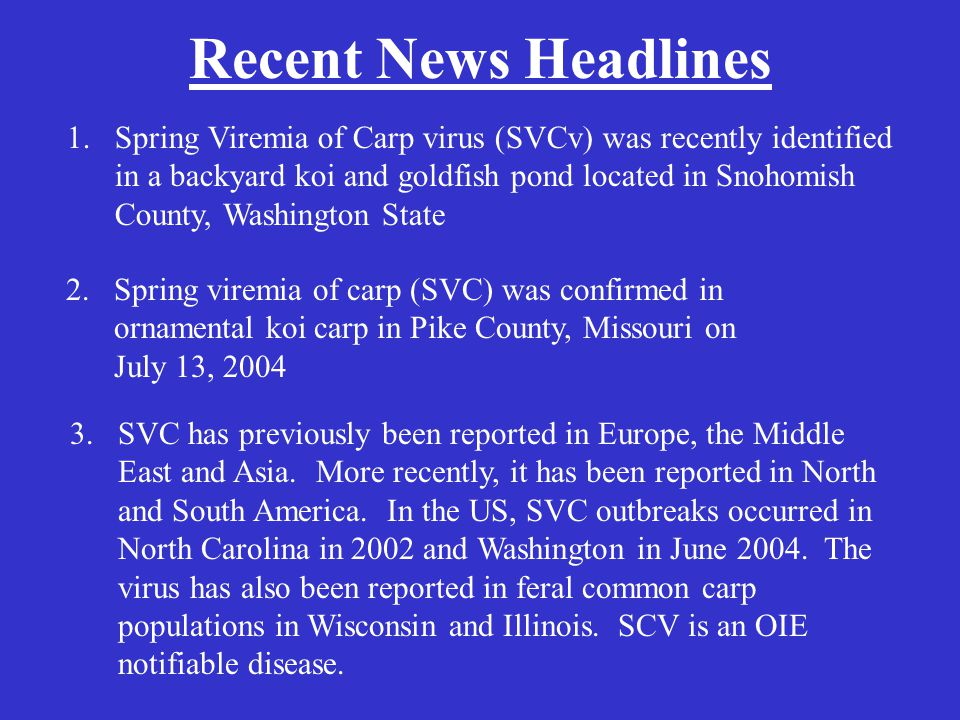 Recent News Headlines