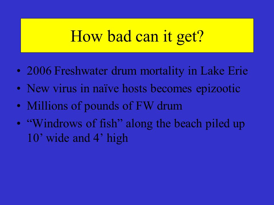 How bad can it get 2006 Freshwater drum mortality in Lake Erie