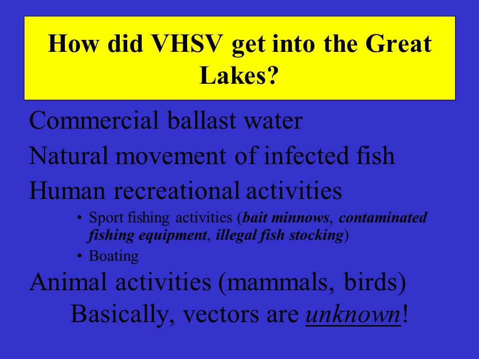 How did VHSV get into the Great Lakes