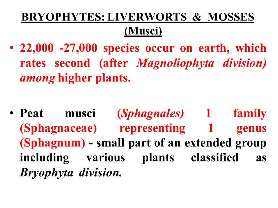 BRYOPHYTES: LIVERWORTS & MOSSES (Musci)