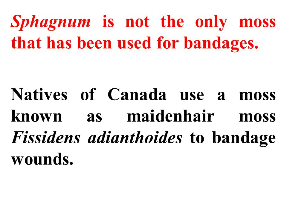 Sphagnum is not the only moss that has been used for bandages.
