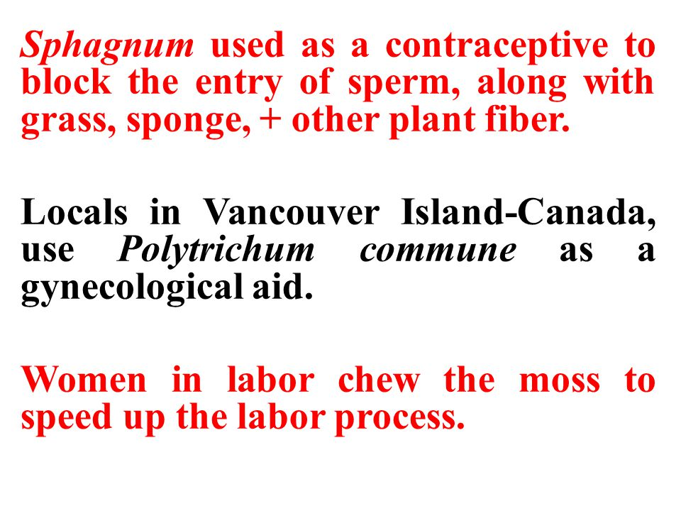 Sphagnum used as a contraceptive to block the entry of sperm, along with grass, sponge, + other plant fiber.