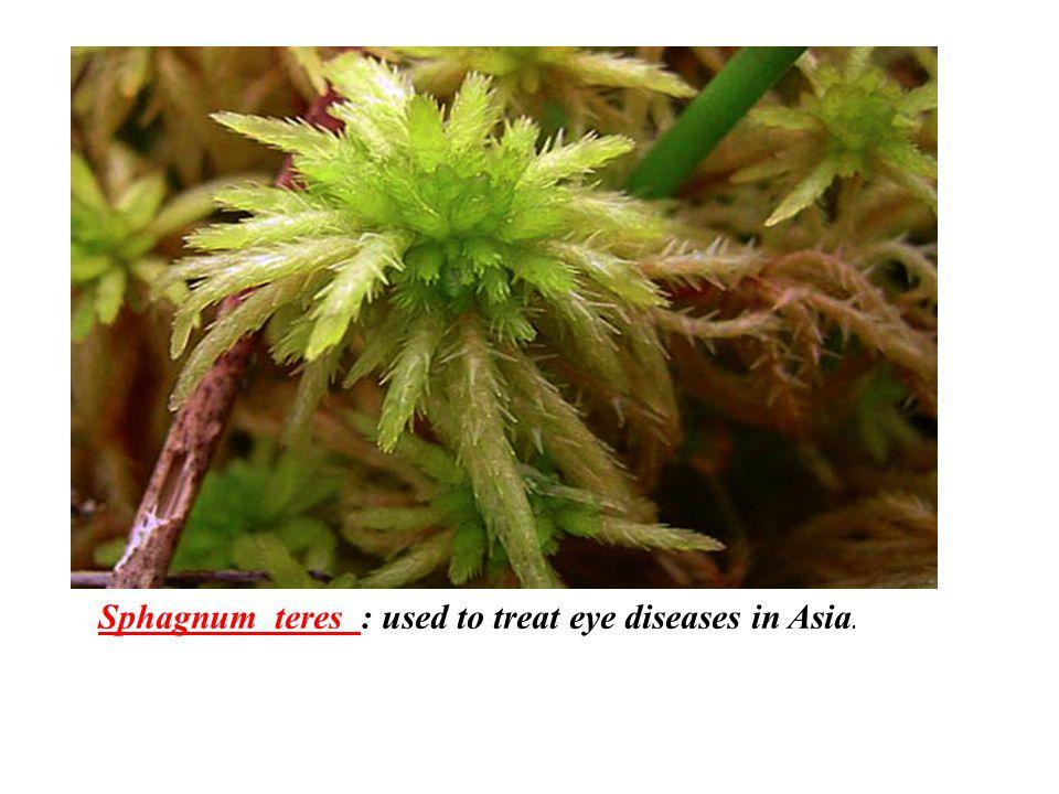 Sphagnum teres : used to treat eye diseases in Asia.